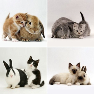 bunnies and kittens